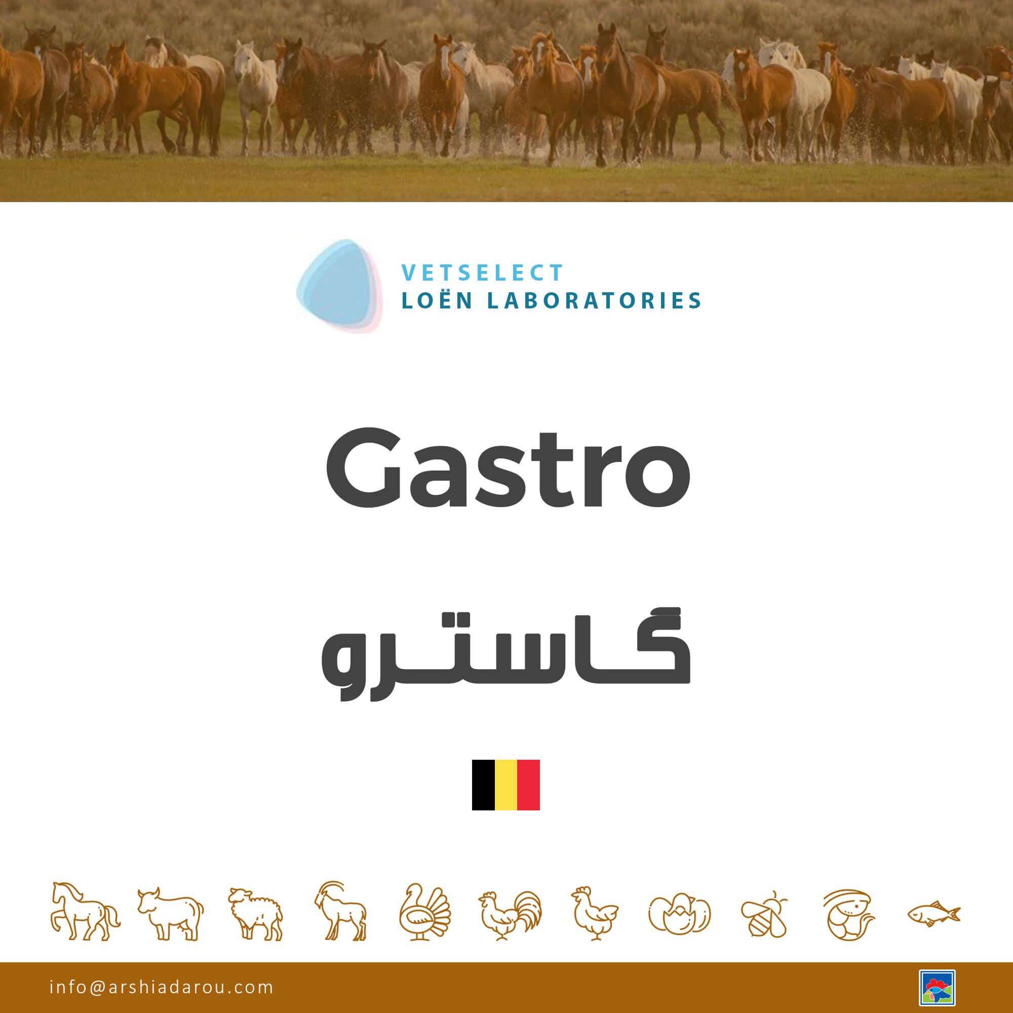 گاسترو