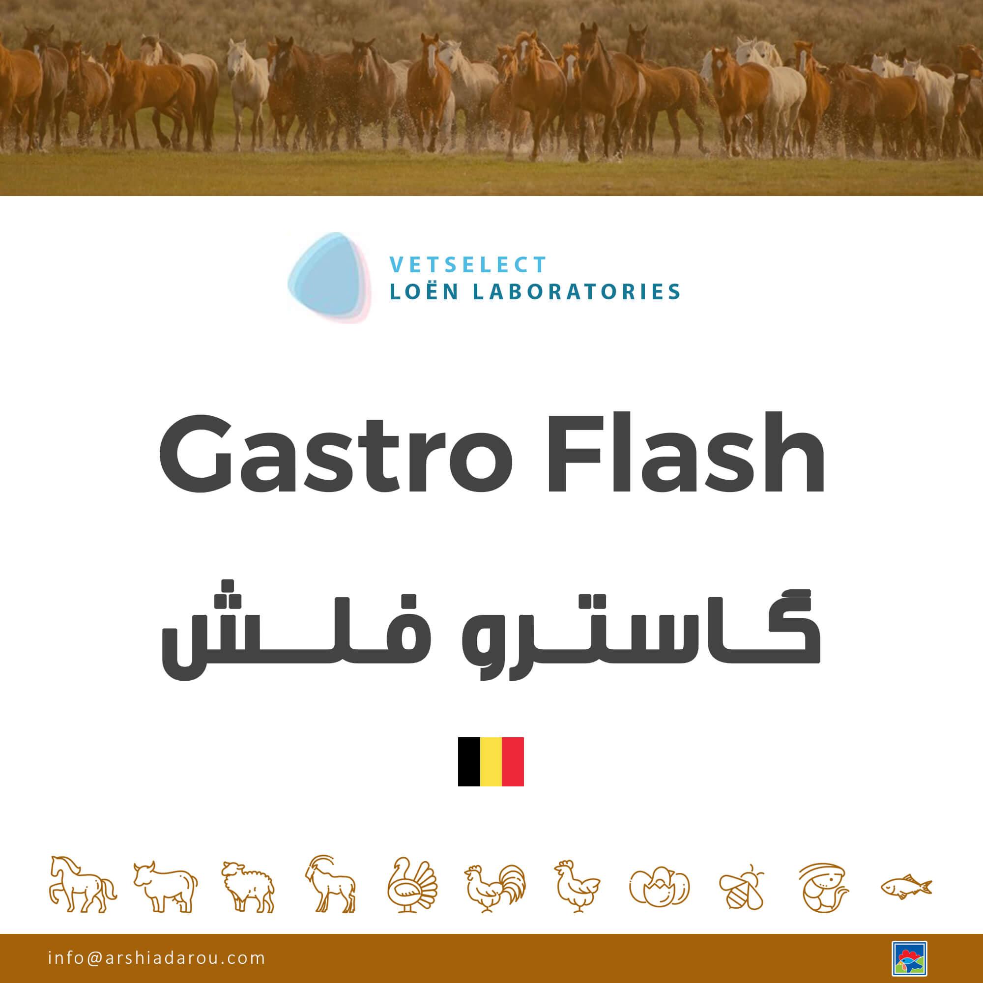 گاسترو فلش